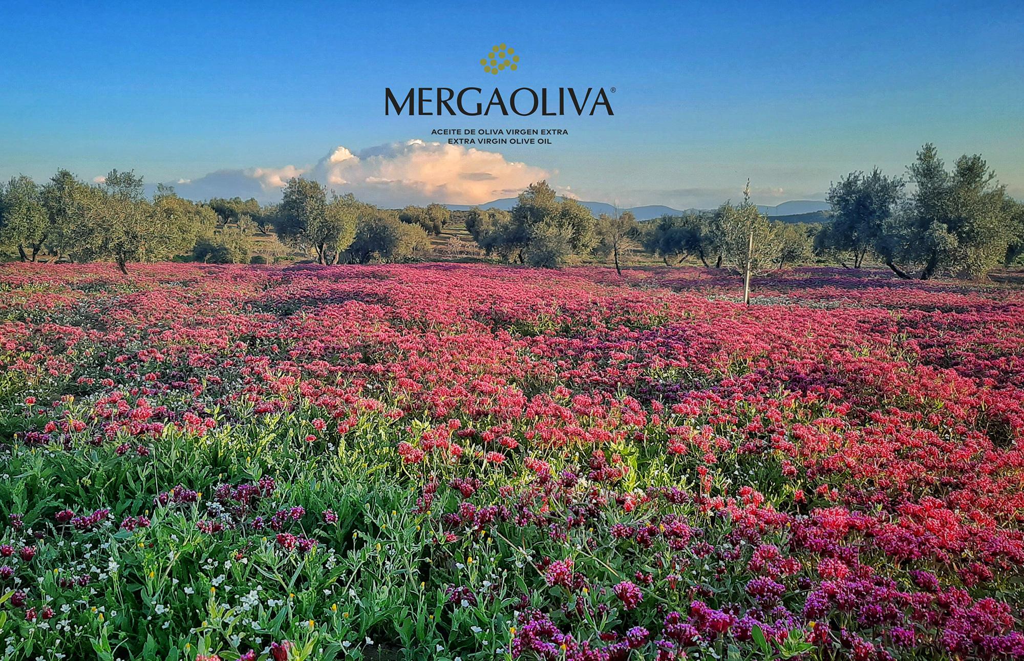 Olivar de Jaén manto de flores